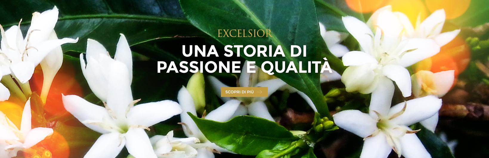Banner_Piantagioni2